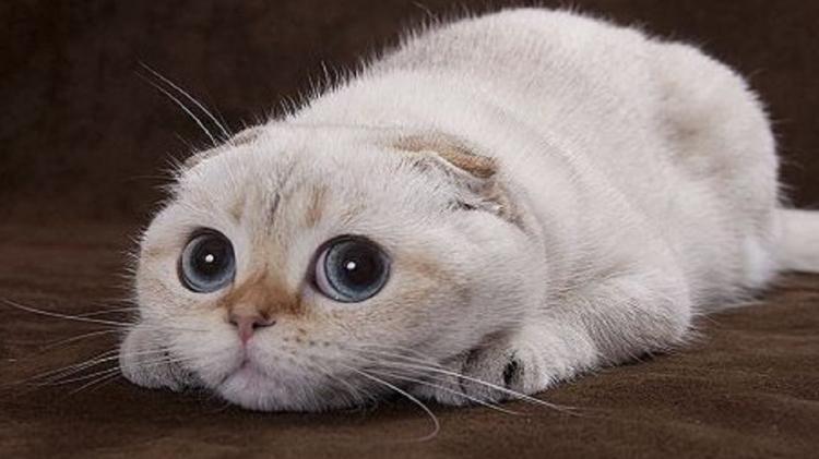 Mi piacciono i Gatti